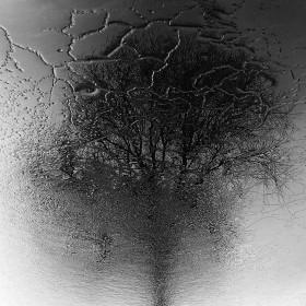 Tree#1 / 20×20